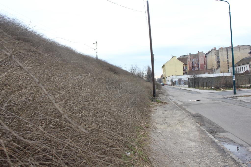 empty old neighborhood